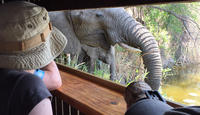 3-Day Tour of Kruger National Park from Skukuza Airport Private Car Transfers