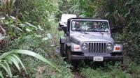 Jungle Jeep and Altun Ha Tour