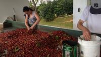 Coffee Plantation Tour from San Juan