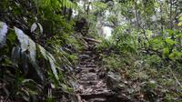 El Yunque Rainforest Nature Walk and Bioluminescent Bay Kayaking Combo Tour