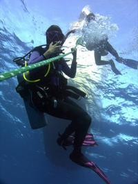 Oahu Certified SCUBA Adventure From Kewalo Basin
