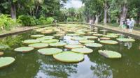 Mauritius Private North Day Tour: Botanical Garden - Sugar Museum - Rum Tasting - Port Louis