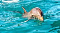 Swimming with Wild Dolphins and Whale Watching