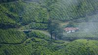 3-Day Private Tour of Tea Valley and Munnar Hill Station from Kochi