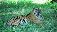 Bannerghatta National Park Private Day Tour with Butterfly Park and Safari from Bangalore