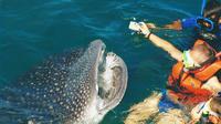 Whale Shark Swim Adventure in Cancun