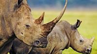 3-Day Safari Tour to Tarangire National Park, Lake Manyara National Park and Ngorongoro Crater from Arusha