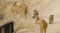 Tanzania Budget Lodge Safari from Arusha