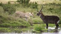 Private Tour: Ngorongoro National Park Day Trip