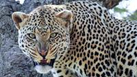 14-Days Bush to Beach Holiday From Arusha: Tarangire National Park, Lake Manyara and Ngorongoro