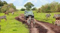 7 Days Tanzania Backpackers Safaris