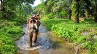 Elephant Trekking in the Jungle of Krabi