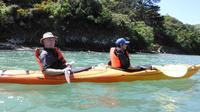 Shore Excursion: Wildlife and Sea Kayaking Safari in Akaroa