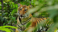 3-Night Wildlife Adventure Tour from Kathmandu
