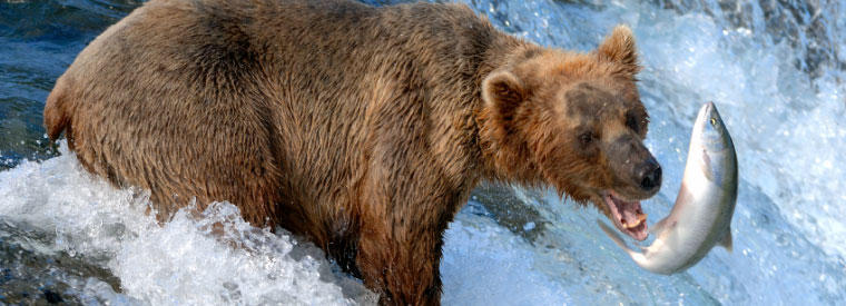 Top Alaska Private Day Trips