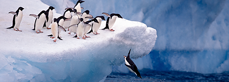Antarctica Tours, Tickets, Activities & Things To Do