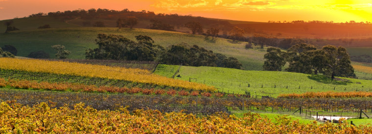 Barossa Valley Balloon Rides