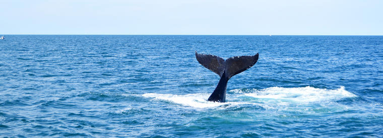 Top Boston Dolphin & Whale Watching