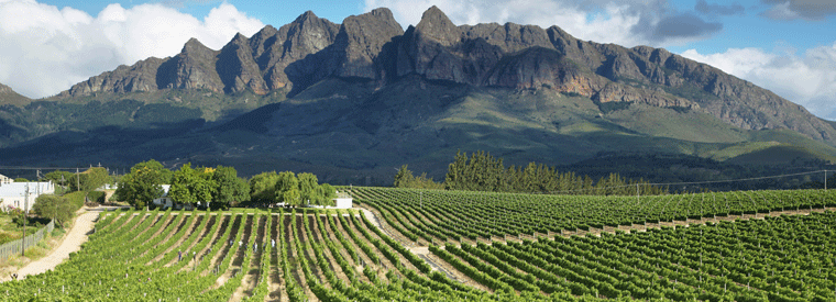 Top Cape Town Wine Tasting & Winery Tours