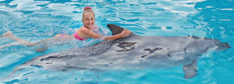 Cayman Islands Swim with Dolphins
