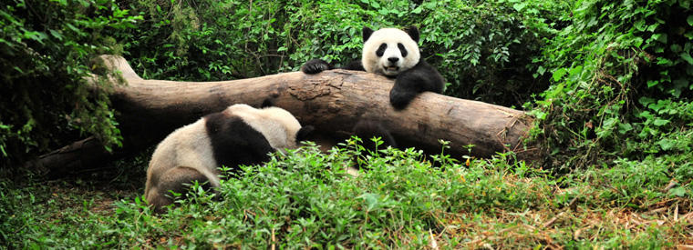 Top Chengdu Theme Parks