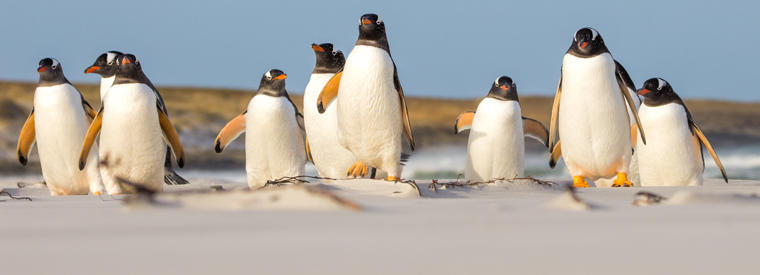 Top Falkland Islands Shore Excursions