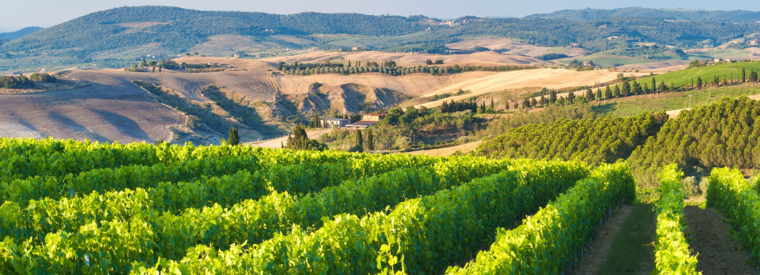 Top Florence Wine Tasting & Winery Tours