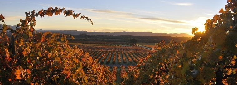 Top Healdsburg Walking & Biking Tours