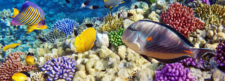 Top Hurghada Multi-day Cruises