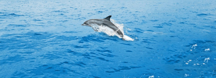 Top Key West Dolphin & Whale Watching