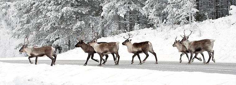 Top Lapland Half-day Tours