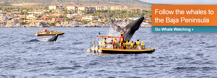 Top Los Cabos Cruises, Sailing & Water Tours