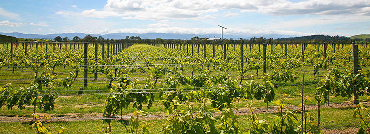 Top Martinborough Wine Tasting & Winery Tours