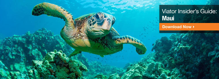 Top Maui Day Trips & Excursions