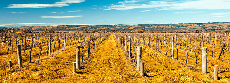 Top McLaren Vale Outdoor Activities