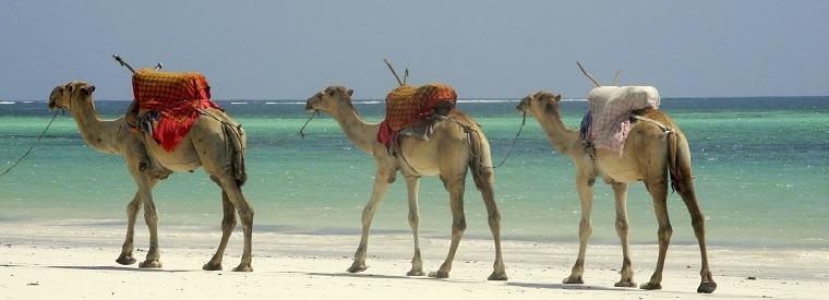 Top Mombasa Sightseeing Tickets & Passes