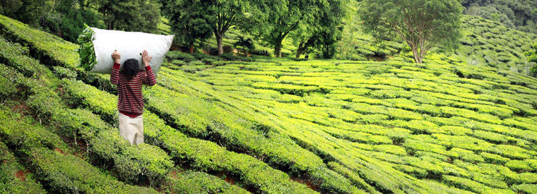 Munnar Tours, Tickets, Activities & Things To Do