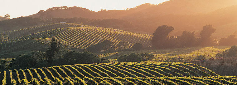 Napa & Sonoma Walking & Biking Tours
