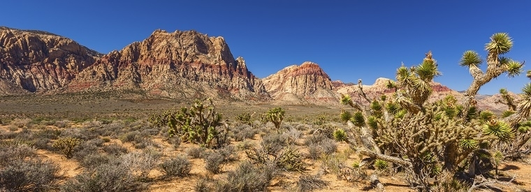 Top Nevada Half-day Tours