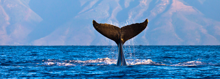 Top Oahu Dolphin & Whale Watching