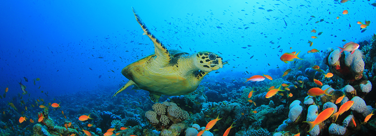 Hawaii Snorkeling Tours Waikiki
