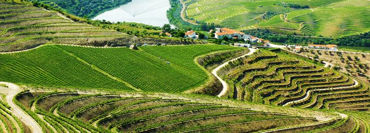 Top Porto Wine Tasting & Winery Tours