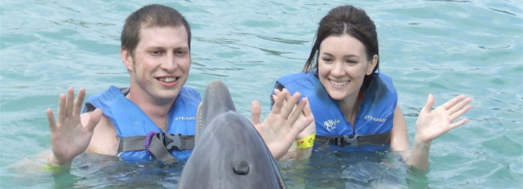 Top Puerto Plata Swim with Dolphins