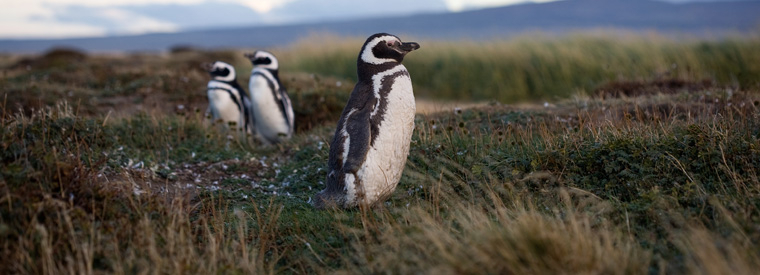 Top Punta Arenas Half-day Tours