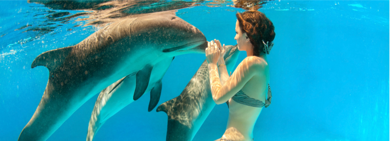 Top Punta Cana Swim with Dolphins