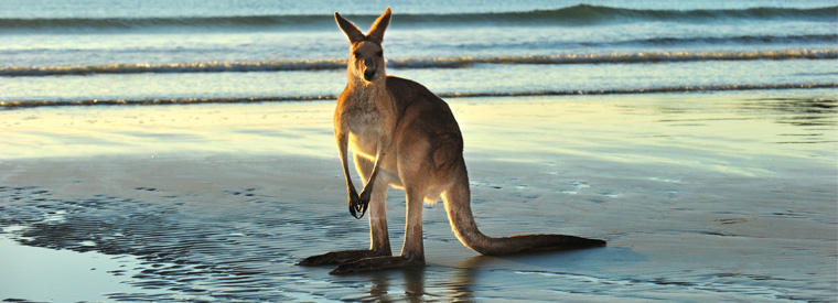 Queensland Nature & Wildlife