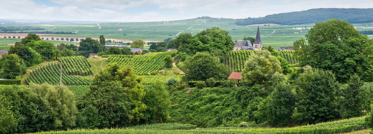 Reims Wine Tasting & Winery Tours