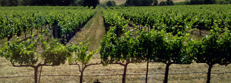 San Francisco Wine Tasting & Winery Tours