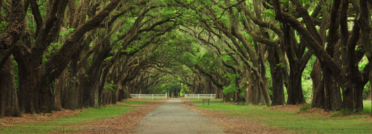Savannah Bus & Minivan Tours