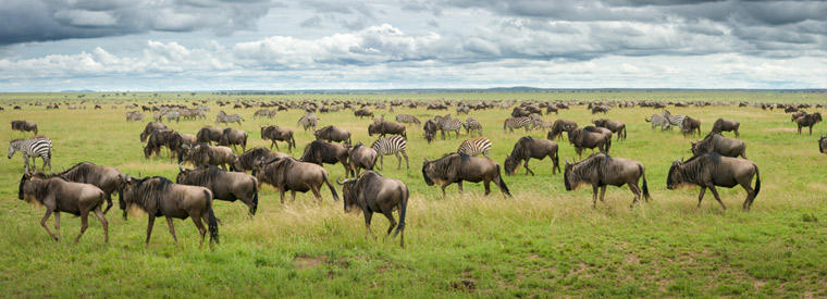 Top Serengeti Safaris